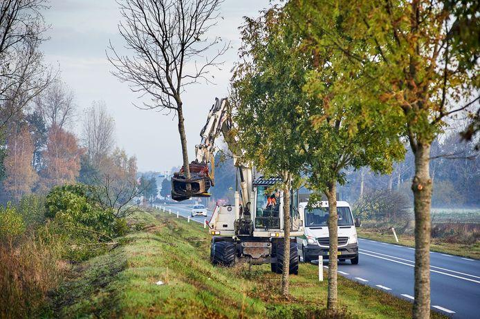 Bomen rooien aan de Udenseweg (provinciale weg A50 Veghel Noord) te Veghel. Foto ter illustratie.