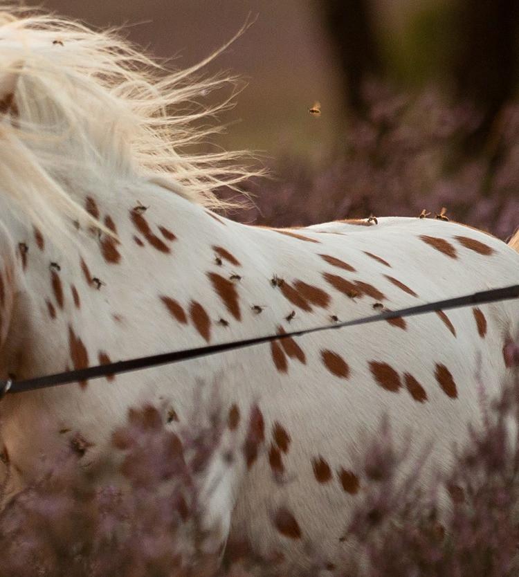 De pony zat ook onder de wespen.