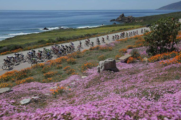 Het peloton in actie in de Ronde van Californië. Beeld afp