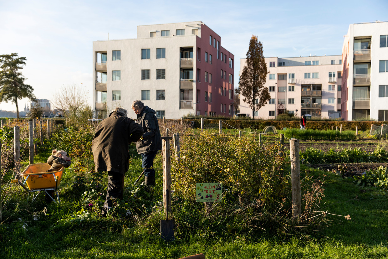 Bijna de  hele oogst  keert terug in  de voedselpakketten van de Voedselbank en in maaltijden van Resto  VanHarte. Beeld Lin Woldendorp