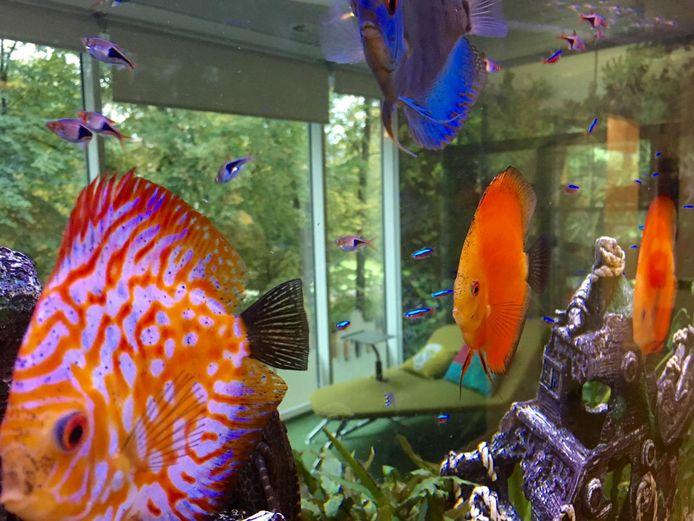 La salle de détente, vue à travers un aquarium.