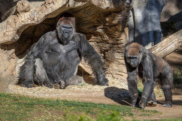 San Diego Zoo Safari Park, Escondido (Californie, USA)