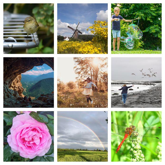 Een selectie van zomerse foto's die ingezonden zijn voor de tweede week van ED Zomerfoto 2020.