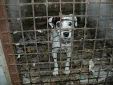 Weer bedrijf failliet van verdachte 'fondsenwerver' voor zielige dieren
