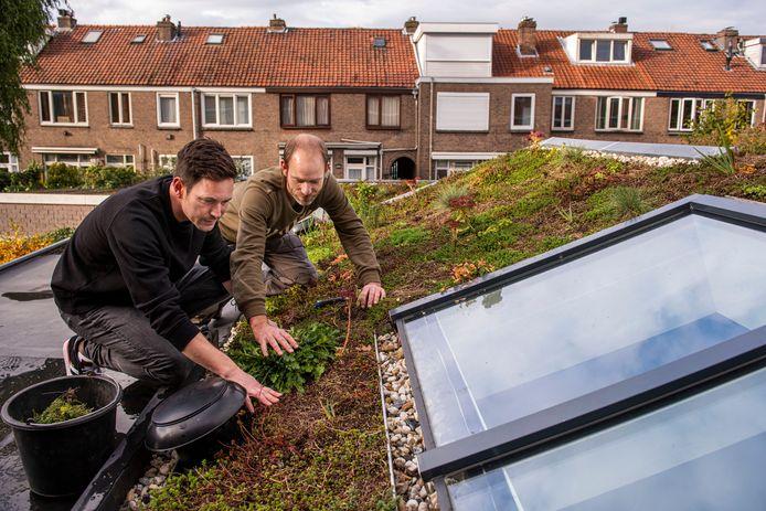 Veel Nederlanders komen vooral in actie als er subsidie wordt verstrekt. In Breda is de subsidie voor groene daken erg in trek.