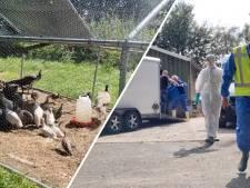 Dierhouder Heeten waar vogelgriep uitbrak had meldingsplicht: NVWA schrijft proces verbaal uit