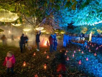 ZIEN. Lichtspektakels zetten stad in de kijker tijdens 'Sint-Truiden by Lights'