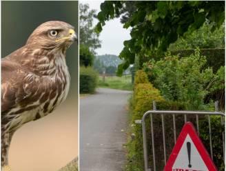 """Agressieve buizerd valt fietsster aan in Wetteren, politie plaatst waarschuwingsbord: """"Gewoon rustig voorbij wandelen"""""""
