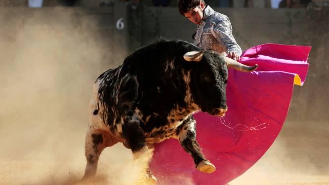 Nog nooit zo'n lange periode zonder corrida's: Spaanse vechtstierenfokkers op rand van faillissement
