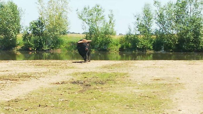 Een beeldfragment uit de video die de klokkenluider maakte van het doodschieten van een stier van stichting Taurus