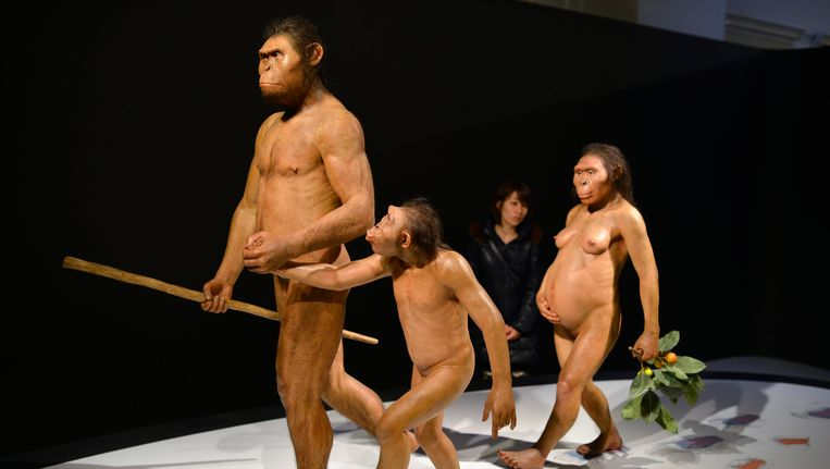 Een Japanse vrouw aanschouwt de Australopithecus afarensis in het Museum of Nature en Science in Tokio. Beeld EPA