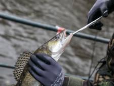 Martin (74) had trek in snoekbaars, maar betaalde uiteindelijk 1060 euro voor zijn visje