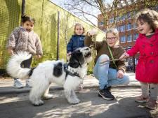 Sacha voelt zich veel gelukkiger door therapiehond Doris: 'Ze kan heel goed geheimen bewaren'