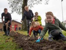 Blubberrun Haghorst pakt overlast processierups op natuurlijke wijze aan: met plantjes