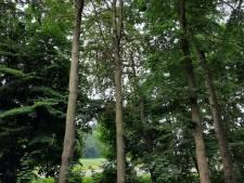 Gelderland laat 20 verdroogde beuken kappen in Ruurlo, resterende bomen krijgen 'boost'