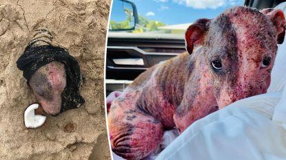 Man begraaft hond levend op strand. Ze wordt gered en lijkt vertrouwen in mens langzaam terug te vinden
