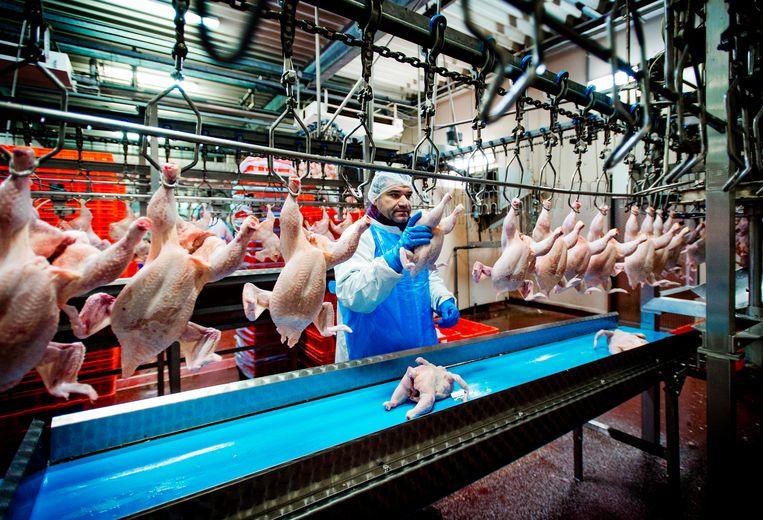 Een kippenslachterijbedrjf. Beeld ANP
