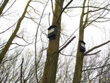 Nestkastjes in Thools stadsbos zijn voor vleermuizen die 'hun' populieren geveld zagen worden