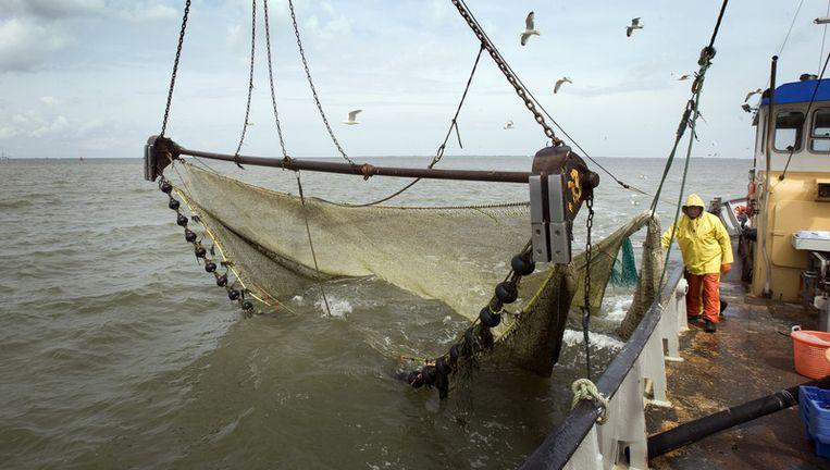 Tijdens een persexcursie introduceert het bedrijf Heidema en Van der Ploeg machinaal gepelde Noordzeegarnalen. Beeld