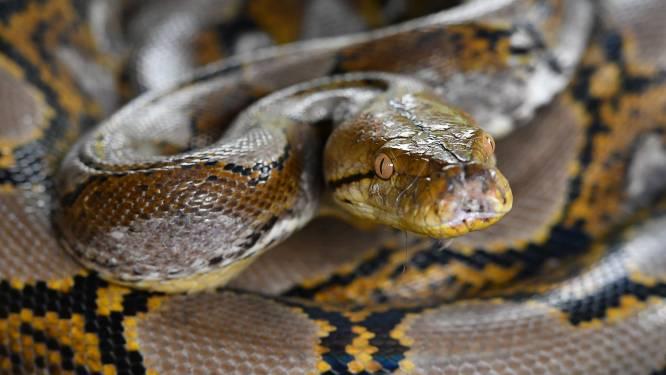 Un enfant tombe sur un... python dans une forêt française