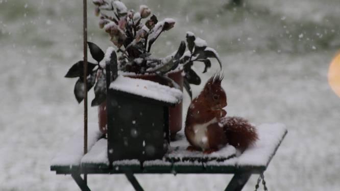 Hier vind je de mooiste sneeuwfoto's uit Zottegem