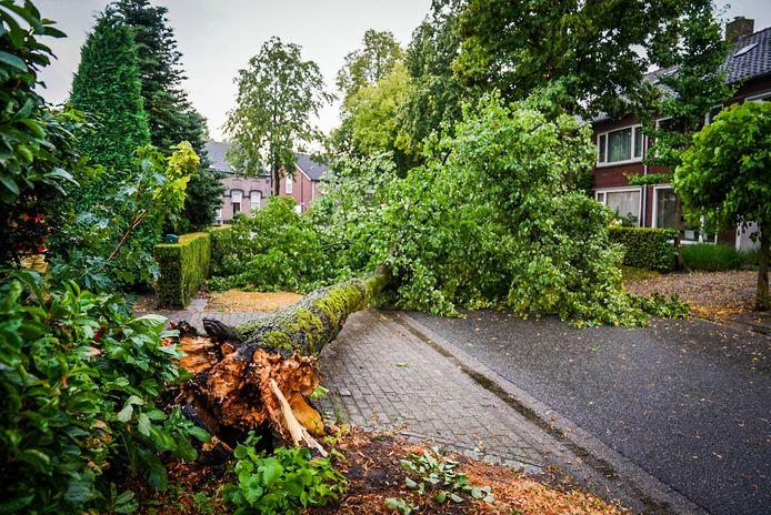 Omgewaaide boom in de Eeuwselsestraat in Nederwetten.