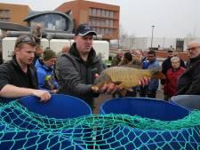 120 knoeperts van Belgische karpers bevolken vanaf nu de weer schone Berkel