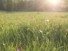 Bewoner ziet 'iets wits' in weiland Sterksel liggen: blijkt naakte, onderkoelde jongen, vermoedelijk onder invloed van drugs