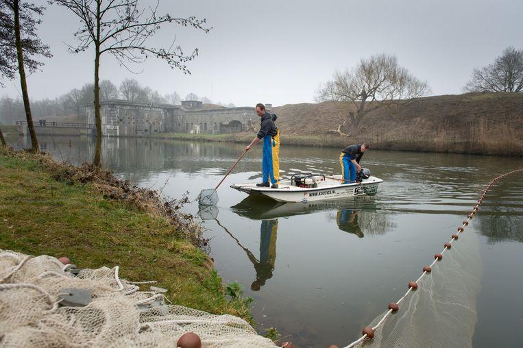 Twee vissers halen roofvissen uit het water.
