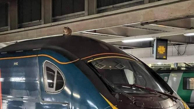 Koppige kat op dak Londense trein pas na 2,5 uur gevangen
