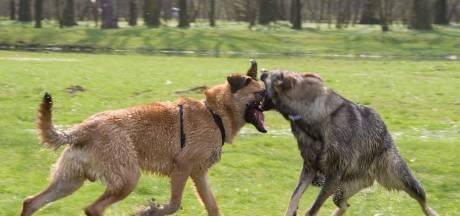 Politie lost waarschuwingsschot om vechtende honden uit elkaar te halen