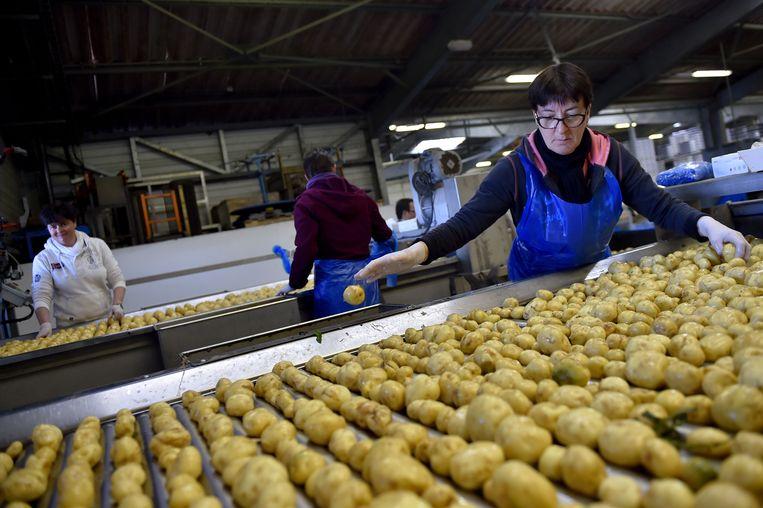 De Belgische aardappelsector bloeit, maar vreest een handelsoorlog met Zuid-Amerika Beeld AFP