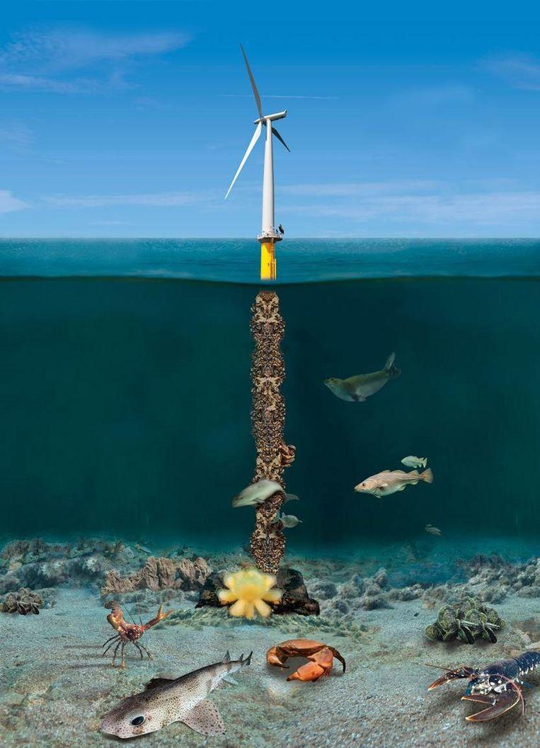 Foto's van het project Rijke Noordzee  Beeld Bas van de Sande