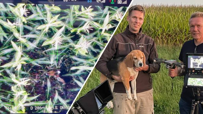 Broers Wouter en Roger sporen vermiste hond Holly uit Diepenheim op met drone