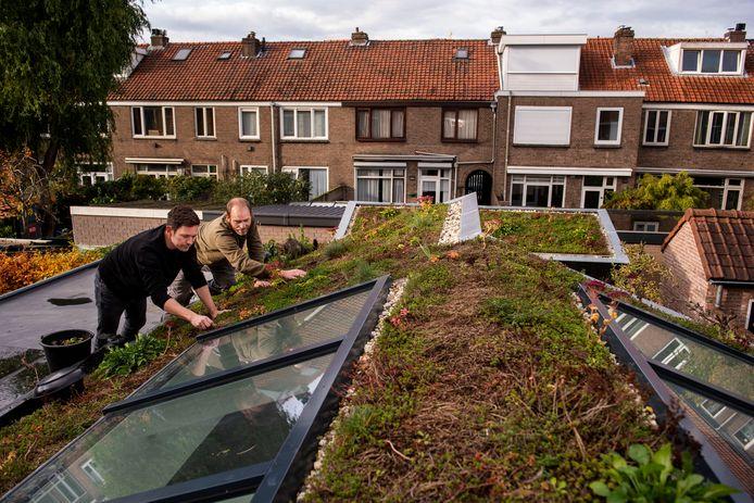 In Breda is in 2020 en 2021 al bijna 10.000 vierkante meter aan groene daken aangelegd.