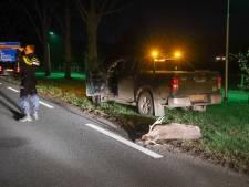 Damhert dood na botsing met auto bij Rheden, automobilist rijdt door