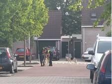 'Hallo politie, er lopen hier twee wolven door de straat'