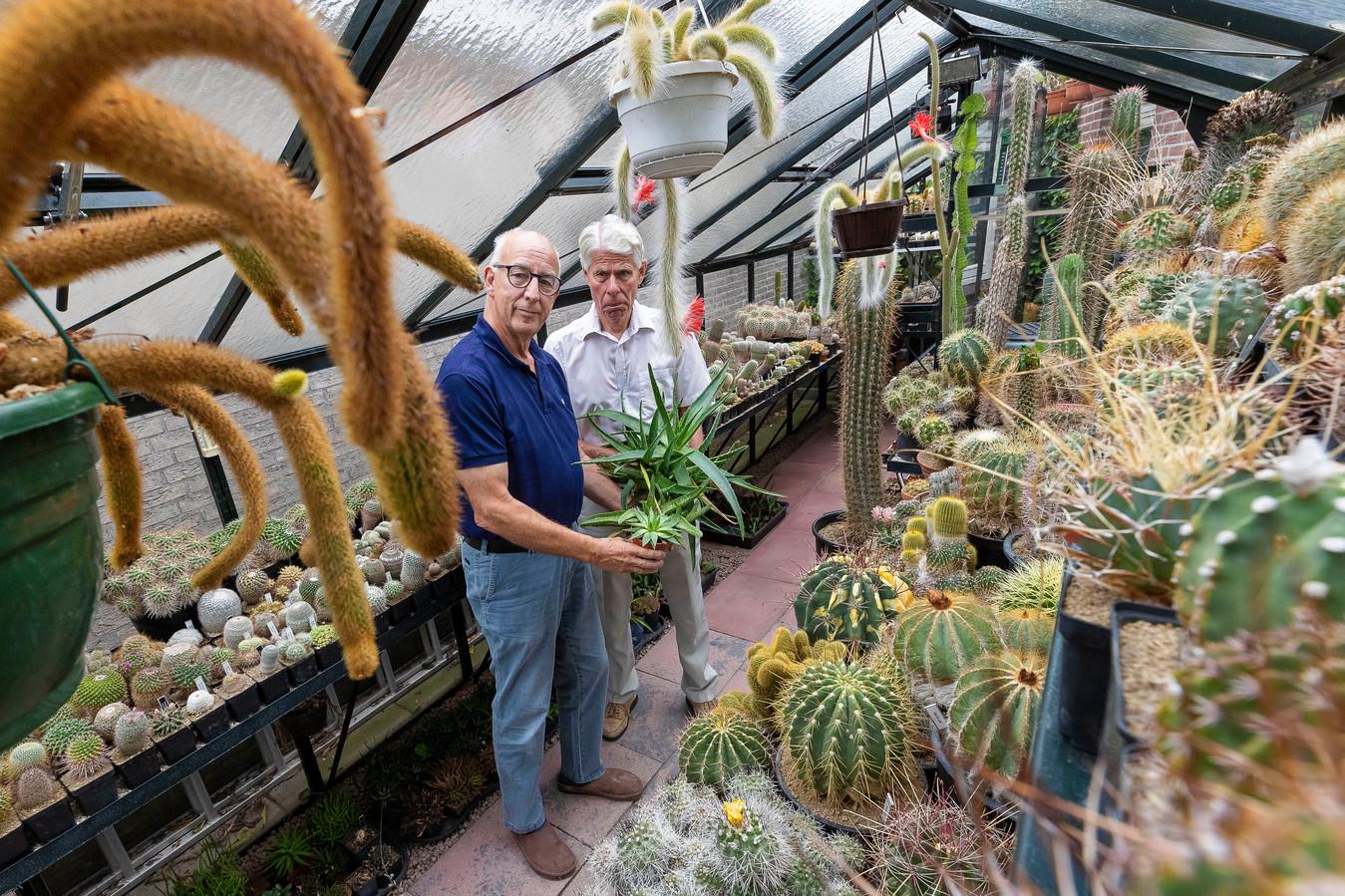 Voorzitter Frans Mommers (links) uit Drunen samen met Ossenaar André van Zuijlen in de kas. Ze zijn bestuurslid bij de honderjarige Nederlands-Belgische Vereniging van Liefhebbers van Cactussen en andere Vetplanten.