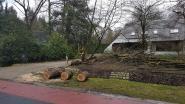 Gemeente werkt aan campagne over gevaar van instabiele bomen bij stormweer