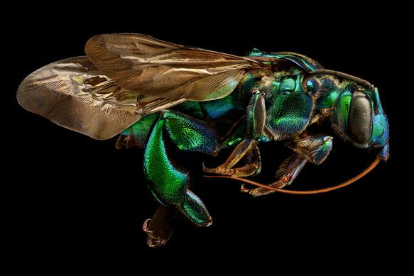 Foto van Deze microfoto's van insecten zijn voor het eerst te zien in de Benelux