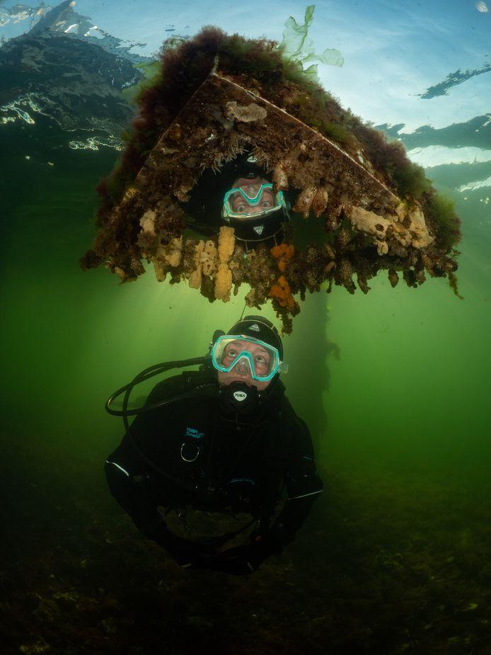 De winnende foto van Marloes Otten, genomen bij de duiksteiger bij Den Osse.