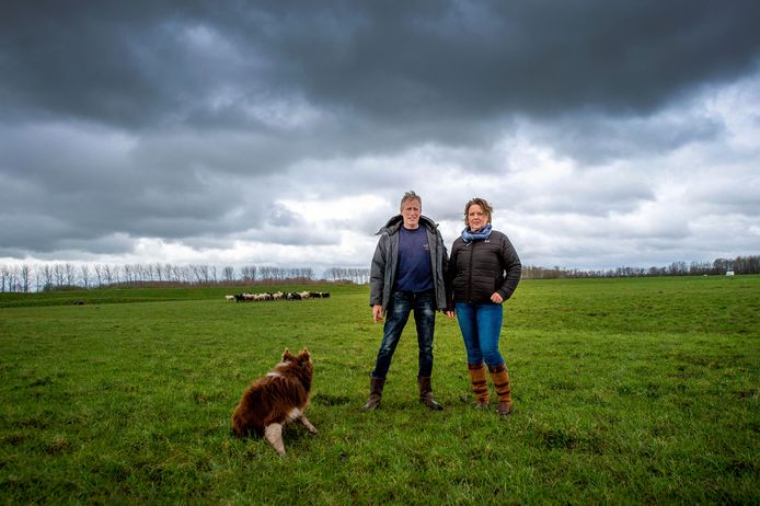 Melisa en Rene Bouman tussen de schapen waar de zonnepanelen komen.