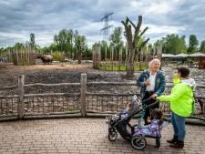 Oppas-opa's en -oma's; de kurk waar de Nederlandse economie op drijft