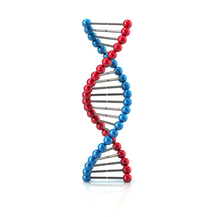 Genetische centra bieden test voor 1.000 euro screening aan. Beeld Shutterstock