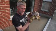 Wielsbeekse tweekoppige schildpad viert zevende verjaardag
