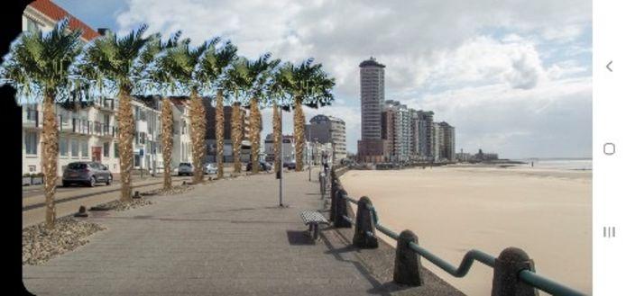 Boulevard Evertsen getooid met palmen.