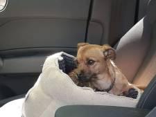 Politie haalt hond uit auto in volle zon bij pretpark Toverland: 'Levensgevaarlijk'