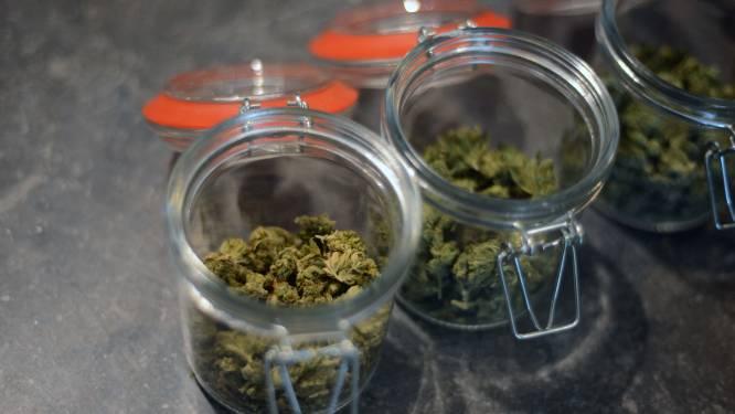 Tot twintig maanden cel voor cannabisteelt