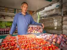 Zorgen bij fruitteler om bizar aprilweer: 'Tientallen tonnen pruimen in gevaar'