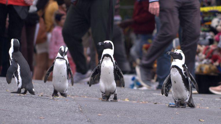 Uit 'Penguin Town'. Beeld COURTESY OF NETFLIX